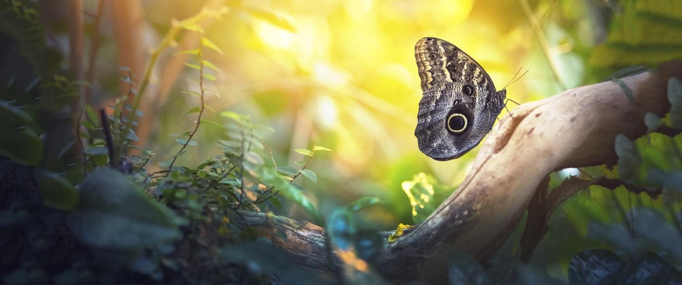 slider-butterfly